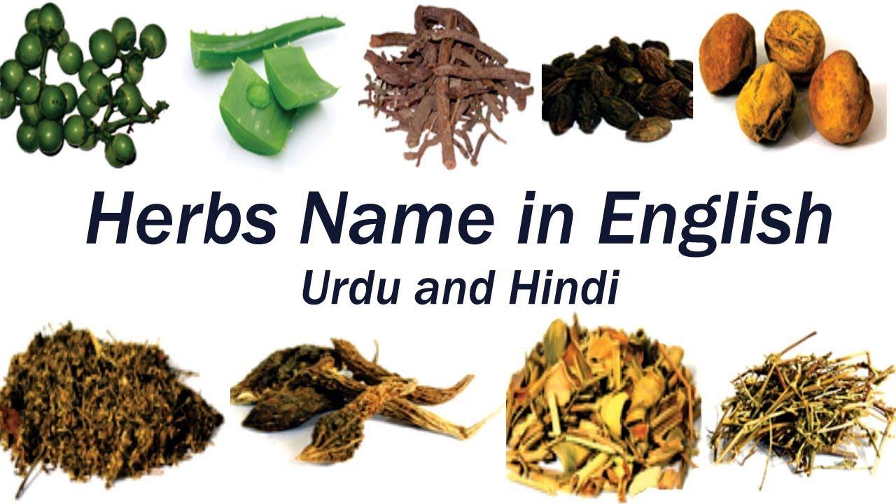herbal medicine dictionary in urdu