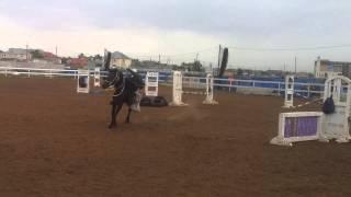 Конный спорт в Тулпаре