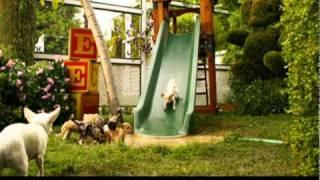 Extrait n°1 - Le Chihuahua de Beverly Hills 2 - le 7 février 2011 en Blu-ray, DVD et VOD