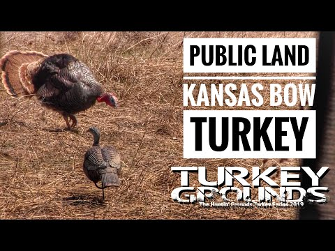 Public Land Kansas Turkey - Rio With Bow S9 #12