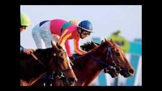 Konie wyścigowe