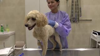 Отоскопия - лечебно-диагностический метод при лечении отитов