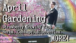Gardening in April: Strawberry Growing Tips + A Closer Look at the Spring Herbs & Vegetables
