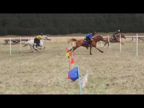 NZ Mounted Games 2013