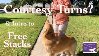 Dog Show  Courtesy Turns & Intro to Free Stacks