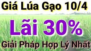Giá lúa gạo hôm nay 10/4/2021 - thị trường lúa gạo mới nhất - thị trường hôm nay - Taiwan Thuy An