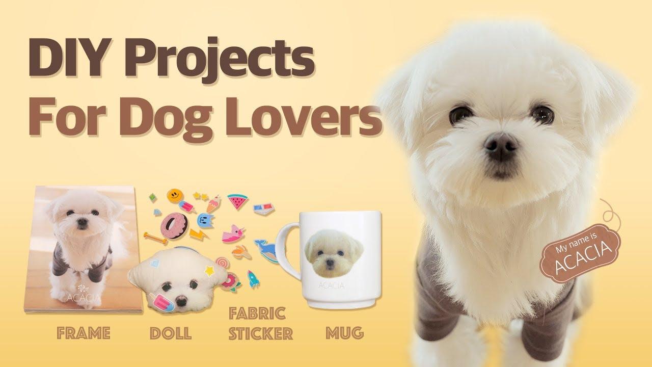 Diy Projects For Dog Lovers 애견인을 위한 Diy 프로젝트 Youtube