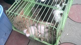 Котята на Центральном рынке Майкопа. Забирайте!