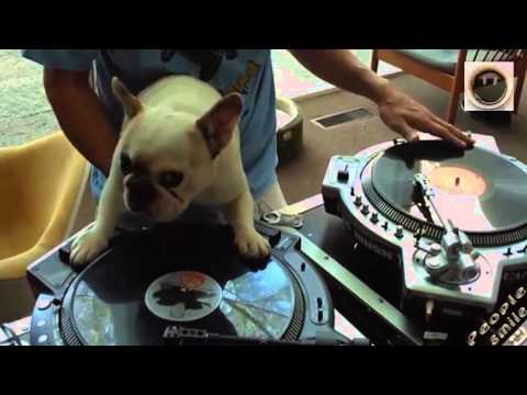 DJ PIES !!! :)