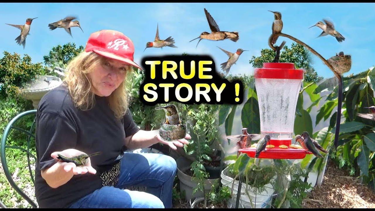 HUMMINGBIRDS NEST in HOUSE Window FEEDER Raise BABIES on EASY Recipe