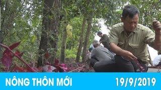 Khơi dậy sức dân xây dựng nông thôn mới   NÔNG THÔN MỚI - 19/9/2019