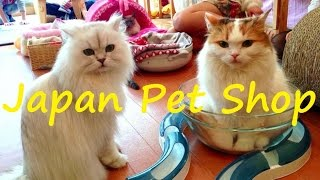 Япония. Магазин для питомца. Зоомагазин. Магазин для животных в Японии