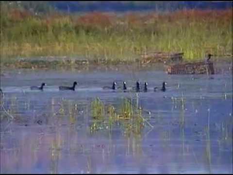 Beautiful Lake of Malkhed Amravati visit by Dr.V.T.Ingole 12-10-2006.mpg