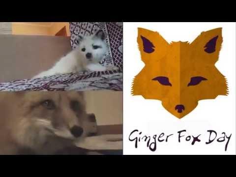 #6 Ginger Fox