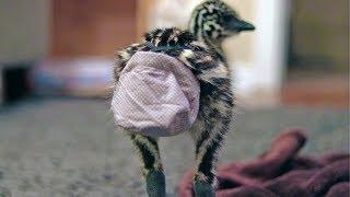 The FUTURE of emu diapers