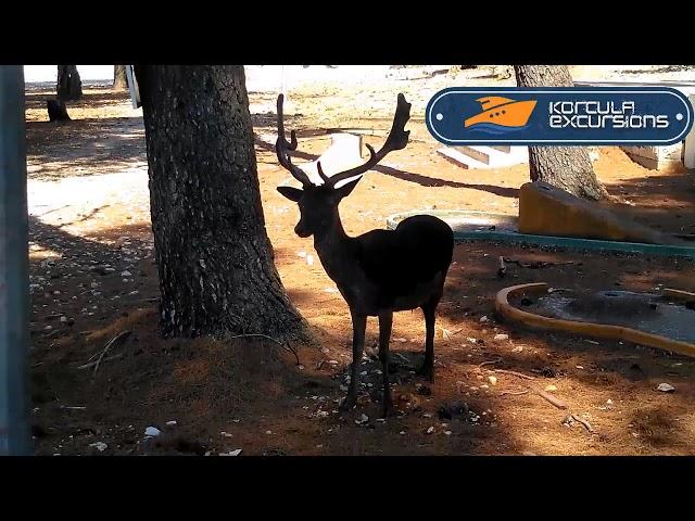 Badija Island Deers - Korcula Excursions - Korcula Boat Tours