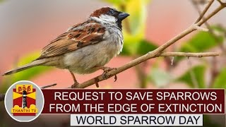 World Sparrow Day : Social Activists request to save Sparrows from the edge of extinction