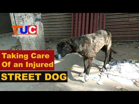 Taking Care of an Injured STREET DOG : TUC