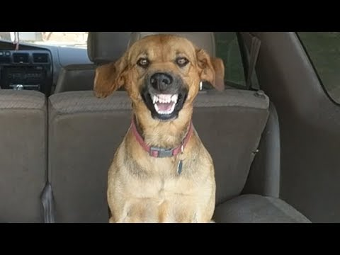 Stubborn dog makes hilarious face when asked to leave car