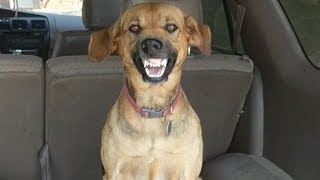 stubborn-dog-makes-hilarious-face-when-asked-to-leave-car