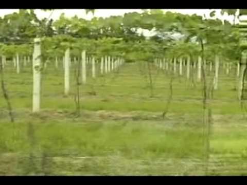 Honduras - Agrobusiness