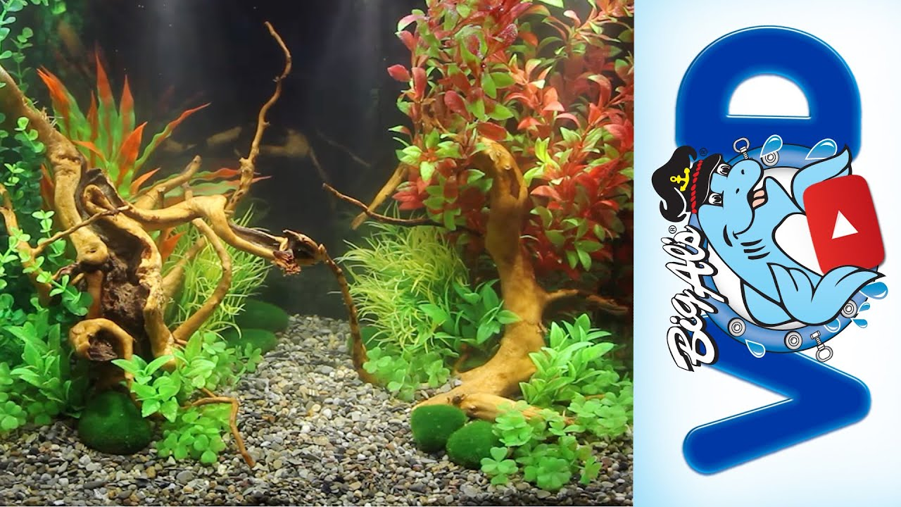 How To Use Fake Aquarium Plants To Create Stunning Natural Aquascapes | Big  Alu0027s   YouTube