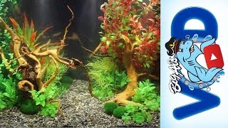 How to use Fake Aquarium Plants to Create Stunning Natural Aquascapes | Big Al's