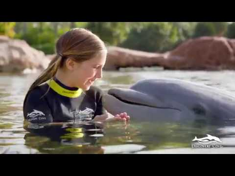 Discovery Cove® Resort Packages - Video