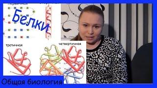 Урок биологии №30. Белки. Строение и функции.