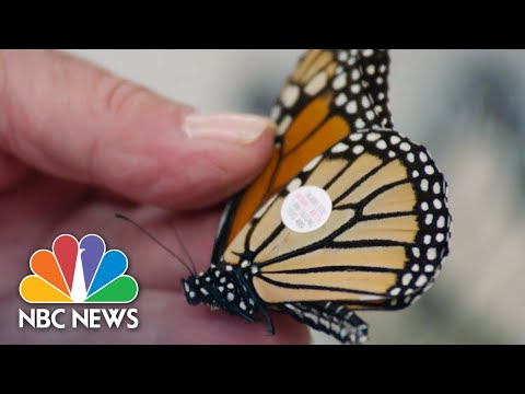 Monarch Butterflies, Internet Anniversary, And Snowball Ban | NBC News For Universal Kids