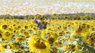 The Soft Spots- Sunflower Fields
