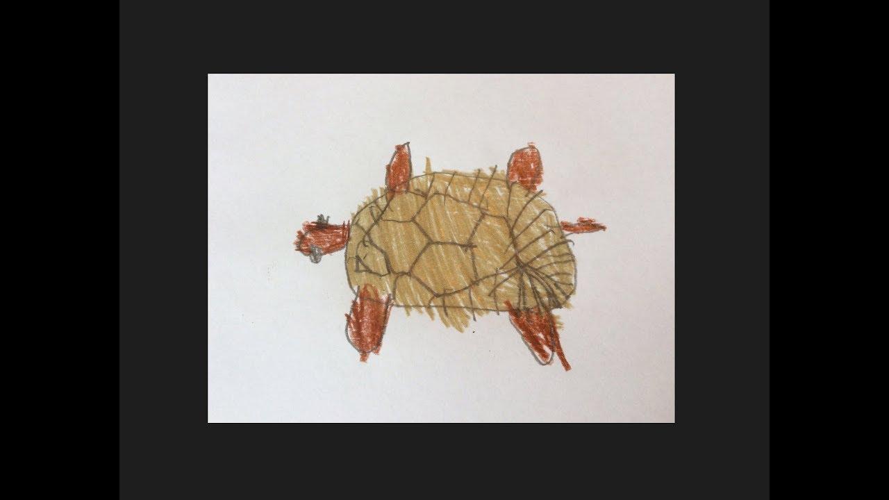 Großzügig Schildkröte Farbseite Fotos - Malvorlagen Von Tieren ...