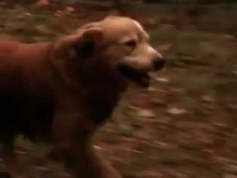 Homeward Bound Emotional Ending (Try Not Crying or Tearing Up.)
