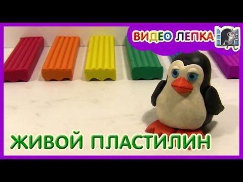 ЛЕПИМ КОШКУ  СТОЯЧКУ  ИЗ ПЛАСТИЛИНА  Видео Лепка