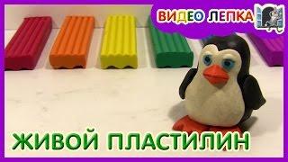 Лепим ПИНГВИНА из пластилина | Видео Лепка