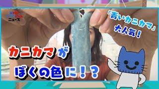 カニカマがぼく色に!?「青いカニカマ」が大人気!!【マスクにゃんニュース】