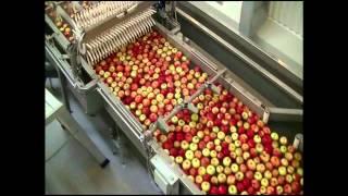 Современные технолгии сортировки фруктов - фирма AWETA, фильм второй