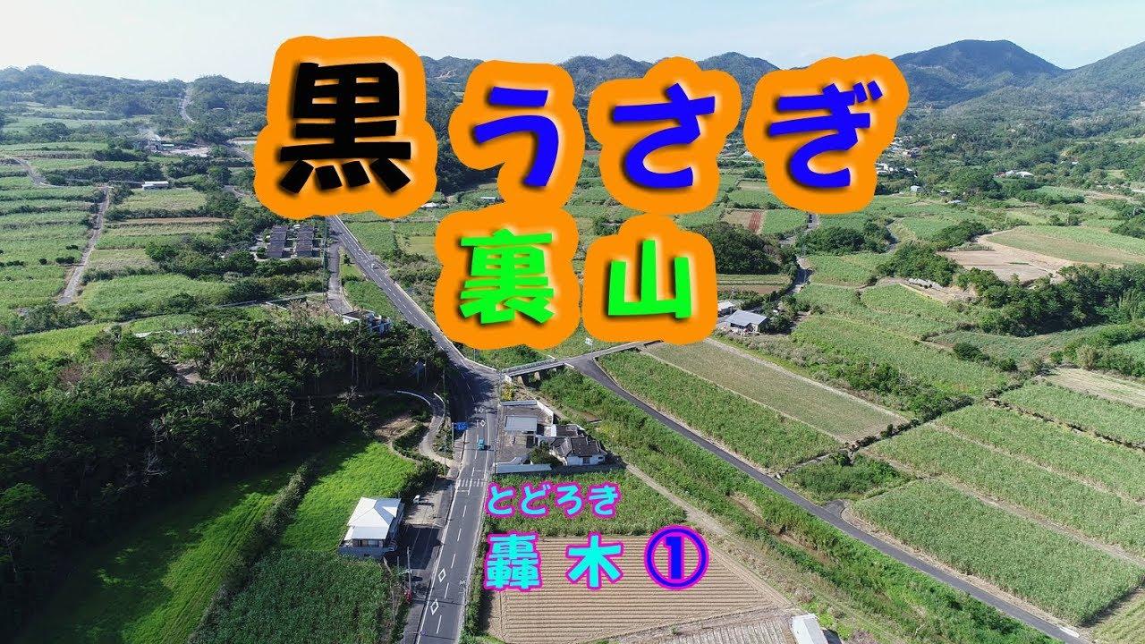 徳之島雑談