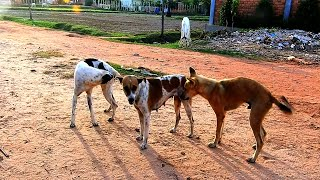 Awesome Rural Dogs !! Dog Meeting for the Summer Season in Village.