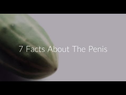 7 Scientific Facts About the Penis - Sex & Psychology