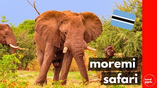 Travel Review: Rescue & Wildlife on Moremi Safari (Botswana Self Drive)