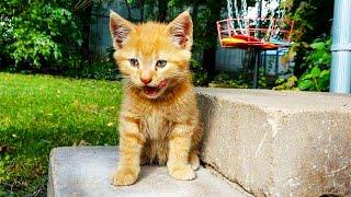 Мужчина решил покормить бездомного котенка, но тот убежал. На следующий день парня ждал сюрприз