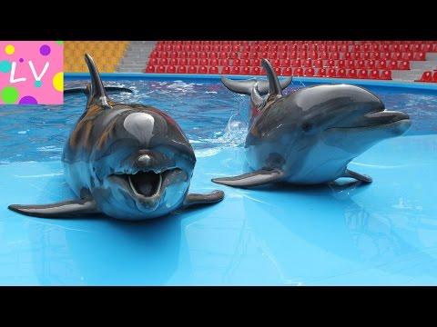 Новосибирский дельфинарий ДЕЛЬФИНИЯ. Dolphinarium in Novosibirsk (Dolphin).