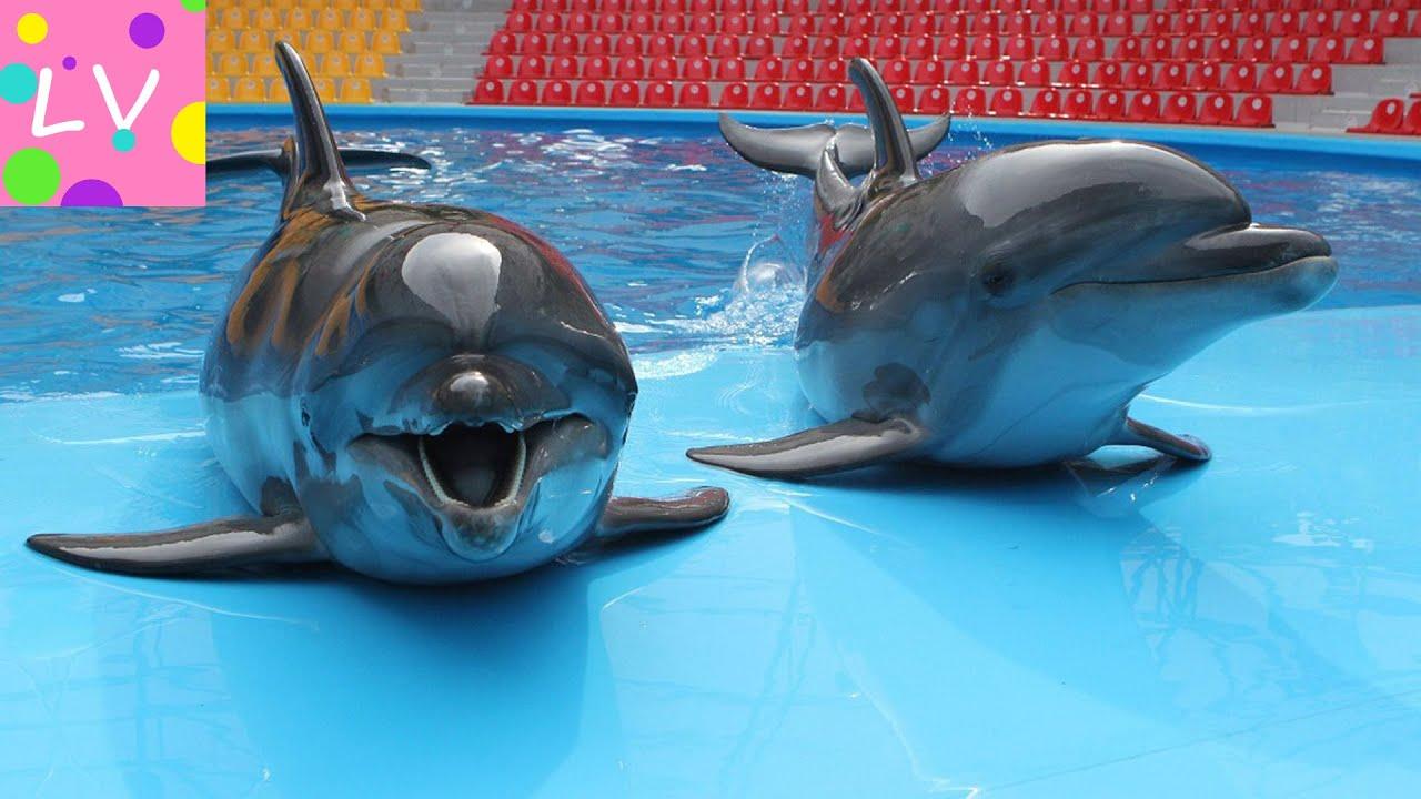 фото новосибирский дельфинарий
