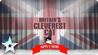 Britain's Cleverest Cat 2014 - Apply Now and Vote | Britain's Got Talent