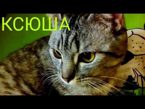 Когда котенку давать от глистов: какие таблетки, что дать