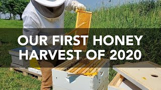 Our First Honey Harvest of 2020