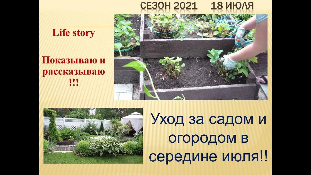 игры про сады огороды