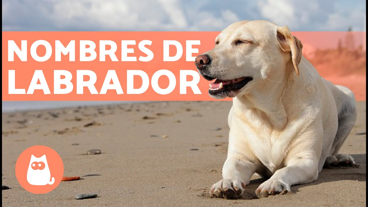 Nombres Para Perros Labradores