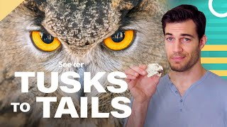 Owl Eyes Are Shaped Like Tubes, Here's Why